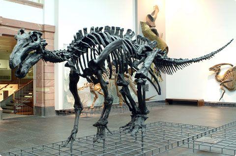 Украина будет пускать россиян в Крым только по спецпропускам.  Самые большие динозавры в мире.