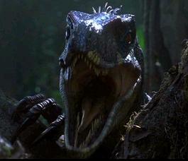 maintenant que vous avez vu la diffrence entre les trois velociraptor des trois jurassic park regardez quoi ressemblez le dinosaure qui