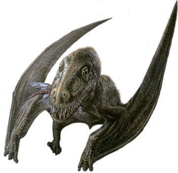 Gigadino batrachognathus - Jeux de dinosaure volant ...