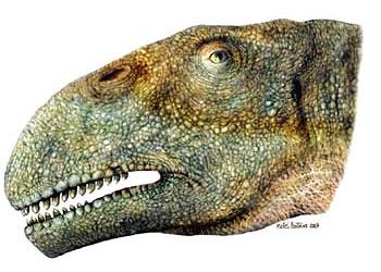 Gigadino les sauropodomorphes for Fenetre mandibulaire